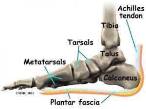 foot_plantar_fasciitis Kettering Osteopath